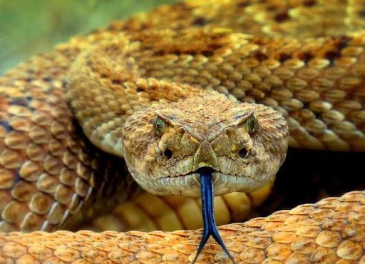 Mơ thấy rắn đánh đề con gì nhanh thắng